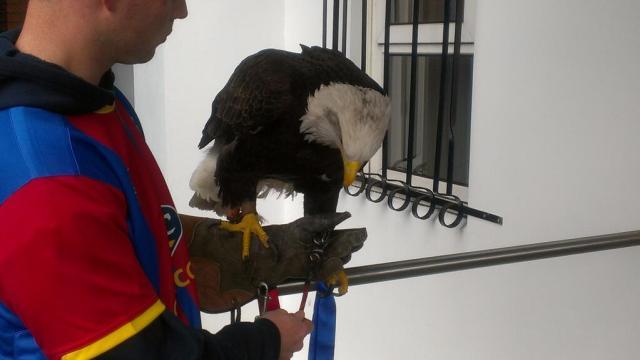 Eagles eagle pre-Posh match