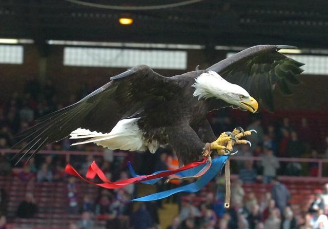 The Eagle in flight