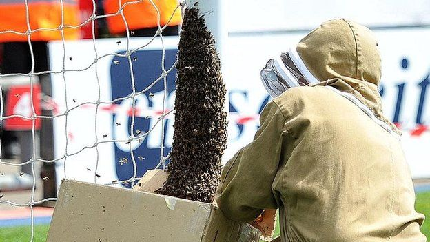 Beekeeper collects the bees at Oldham